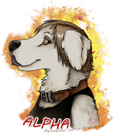 Alpha by Grion