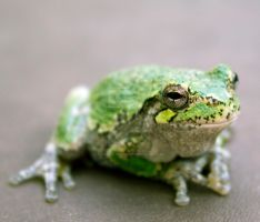 Hot Tub Frog Fred_9589 by creative1978