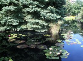 Denver Botanical Lilypads 33 by Falln-Stock