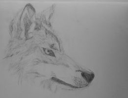 wolf head side drawing 2 by Sabs546