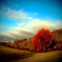 Gatehouse: Scarlet Willow by Coigach