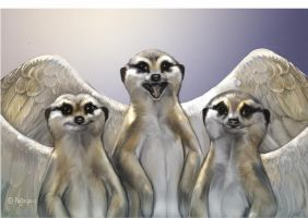 Meerkat 2012 Christmas Card by Reptangle
