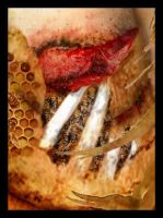 Dreams - Bee Hive Close Up by Nelhemyah