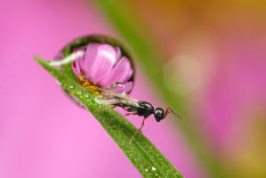 Small Wasp i think by Alliec
