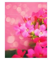 Magic Pinkness by erykucciola