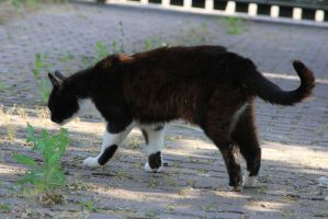 Cat Stock 29 by Malleni-Stock