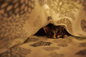 Under the covering by matihlda11