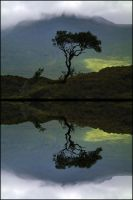 The Tree Loch Nah-Achlaise by MichiLauke