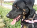 Handsome Troy RSPCA Leeds by lozzzy