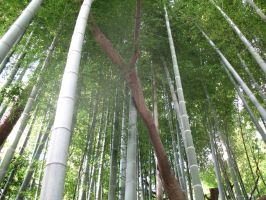 Bamboo forest 2 by Hikaru979