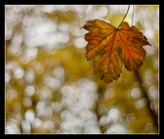 Autumn in park 2 by Alexandra35