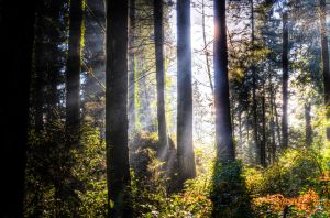 Forest Mist by bens1n