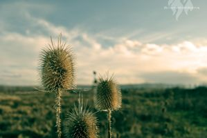 Nature is wild II by zarathos-the-exiled