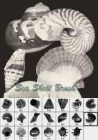 Sea Shell Brush by designersbrush
