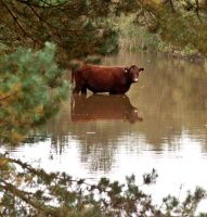 Wet Cow by Xs9nake