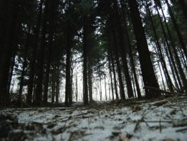Wald. Blick III. by dybe