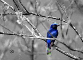 Awe in Blue by Cormael