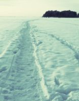 Path on the Frozen Lake by CamilleCamille