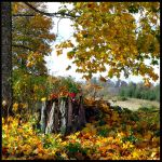 Rudens... by Yancis