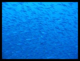 Lots Of Fish by Kamermans