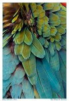 The Parrot Series I by Aderet