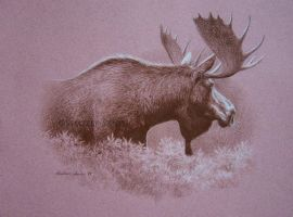Moose Study by Misted-Dream