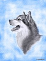 Alaskan Malamute by Puppy93