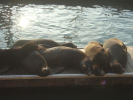 Sea Lions by ThEiUfO