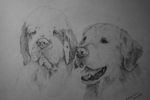 dogs by maaart90