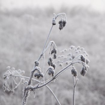 morning dew by ssilence