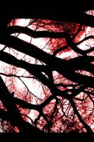 Red Branches by Achmetha