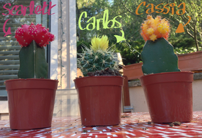 cacti friends by coat