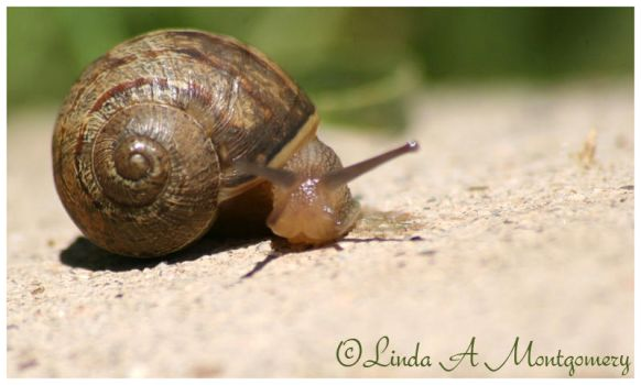 Snail by in2photography