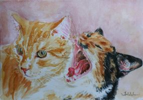 My cats by danuta50