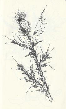Thistle by selva-s