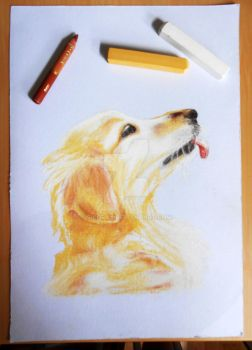Golden retriever illustration by Sikorax