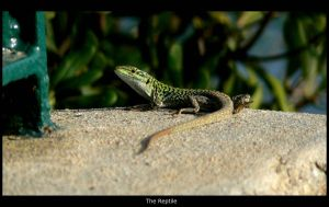 The Reptile by davdiana