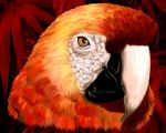 Red Macaw Parrot Portrait by Bluedarkat
