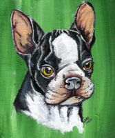 Boston Terrier by lunarfilly