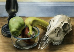 Still Life with Deer Skull by elizabethnixon