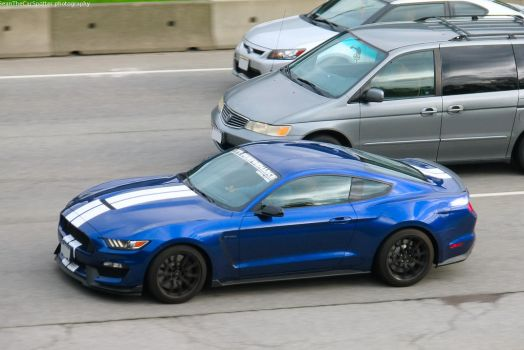 Shelby GT350 by SeanTheCarSpotter