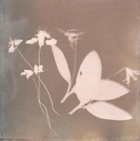 Cyanotype Brown Flowers by mouse2cat