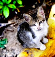 Koom ElDekaa Kitty by habhopa