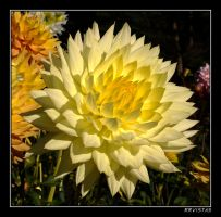 Flower No. 3 by RRVISTAS
