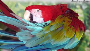 Green Wing Macaw Stock by Moonstone-Designs