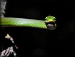 Rough Green Snake 50D0000167 by Cristian-M