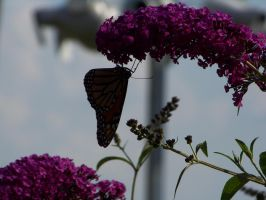 Butterfly Silhouette by Dream-finder