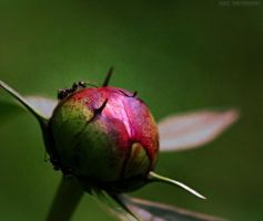 Ant to Bloom by Madz4ever