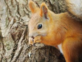 Little squirrel by Mellisia