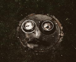 Owl face by BennyBrand